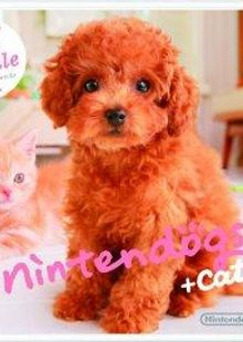 Nintendogs + Cats - Toy Poodle + New Friends 3DS - Game Code chiave a buon mercato per il download